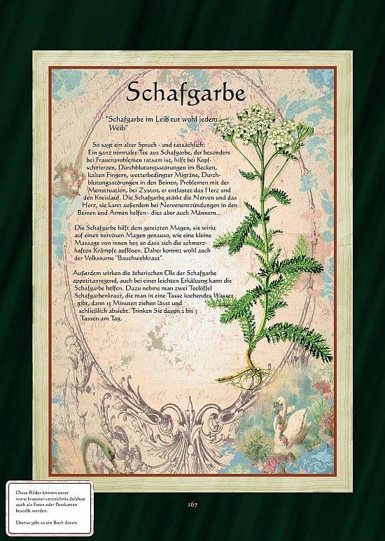 Schafgarbe - Schafgarbentee