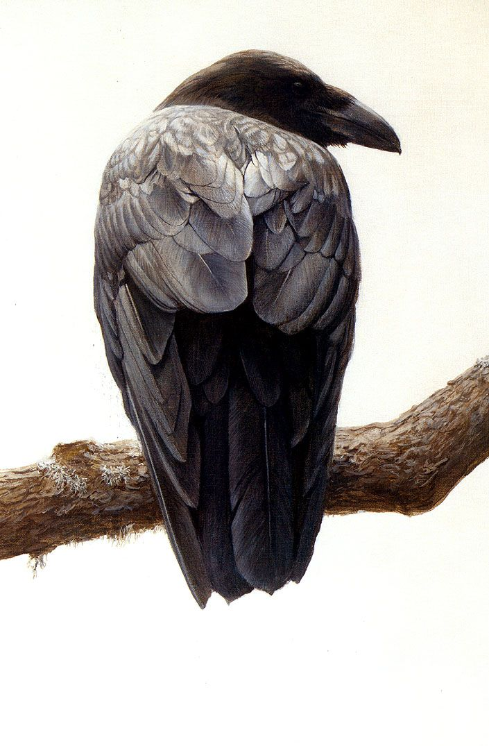 Painting by Robert Bateman. The original painting is in Wyoming.