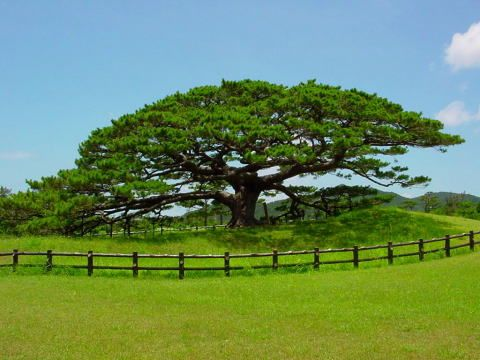 Resultados de la búsqueda de imágenes: Bosque De Una Sola Especie - Yahoo Search