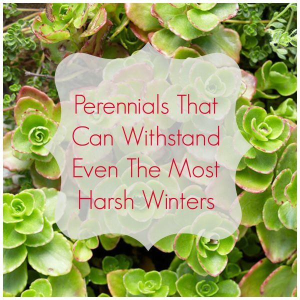 What You Can Plant Now That Can Actually Survive The Winter