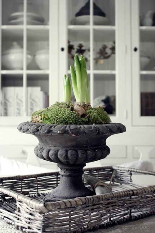I finally bought a great looking urn and plan to do this in February  ❥ blooming bulbs