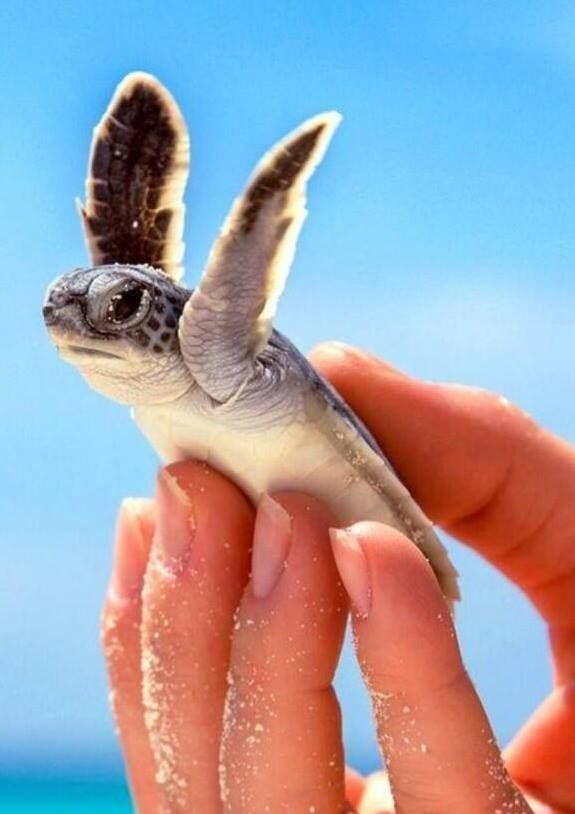 Baby Sea Turtle With It S Arms Up Wild Animals