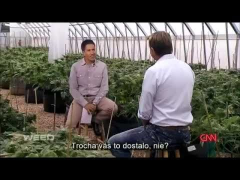 WEED CNN 2013. [titulky SK]