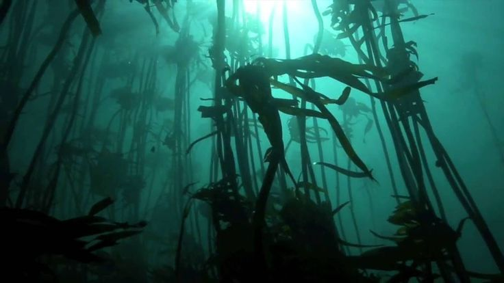 Dreamy diving in kelp forests