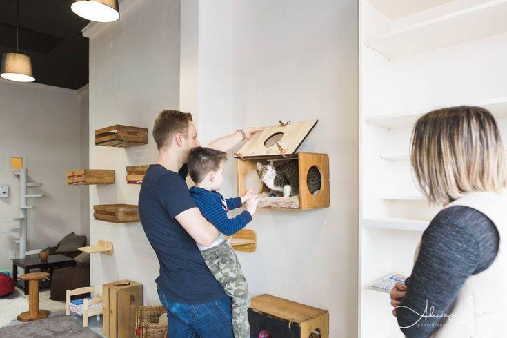 Monkee Tree Scalable Cat Ladder at Neko Ngeru Adoption Cafe,  Wellington,  Auckland