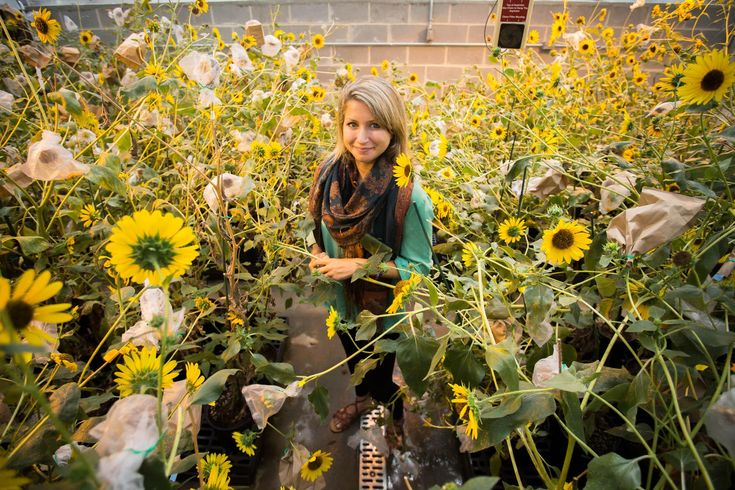 Catie Kitrinos is studying how different types of sunflowers absorb heavy metals.