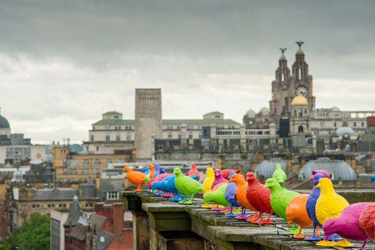 Patrick Murphy's Belonging was commissioned by Walker Gallery for the 2012 Liverpool Biennial, the UK Biennial of Contemporary Art. It responds to the Biennial theme of the 'Unexpected Guest'. Banished from city centres and branded a nuisance, pigeons became a familiar sight at the Walker Art Gallery during the Biennial, when around 205 brightly coloured birds adorned the exterior of the gallery.