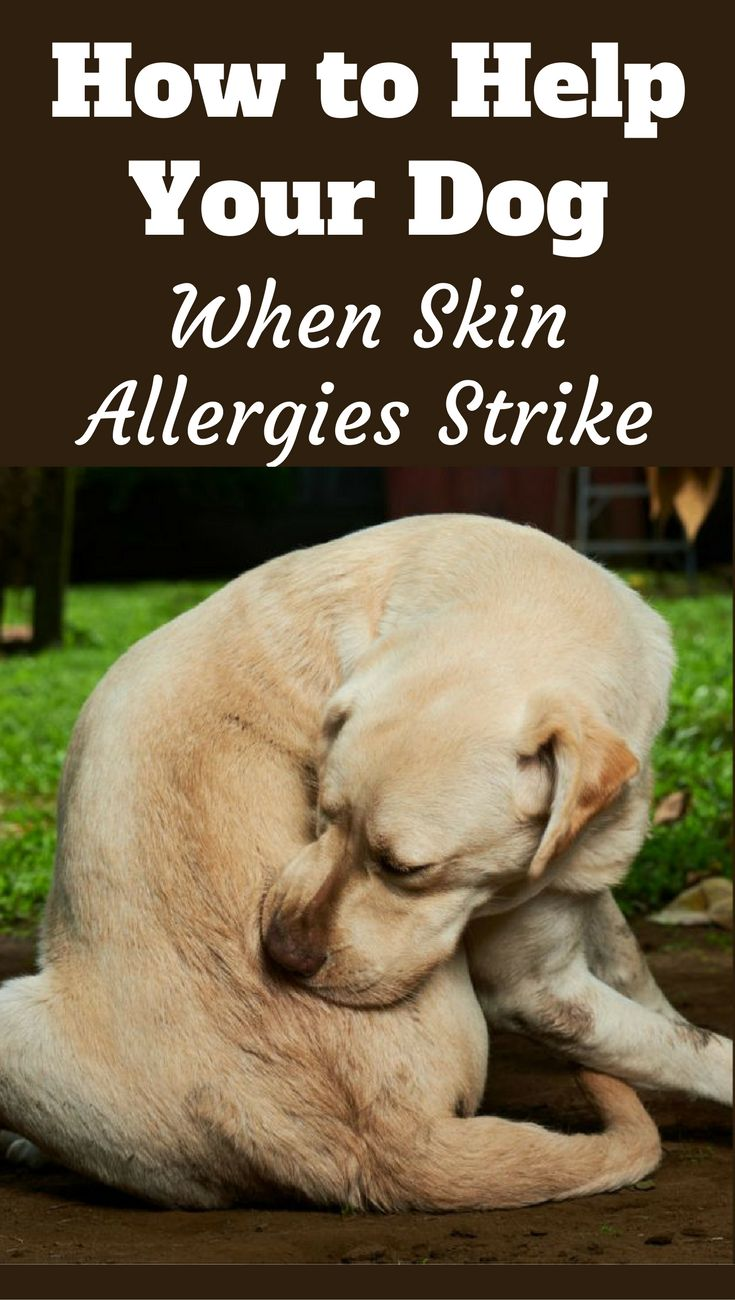 Allergies in dogs can lead to excessive itching and scratching, resulting in wounds and open sores. How can you help your dog? With the advice in our guide.