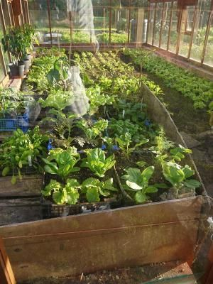 Heating a greenhouse with compost & manure via http://www.permaculture.co.uk