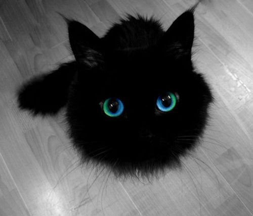 it's a cat that looks like the studio ghibli soot balls from my neighbour totoro!!