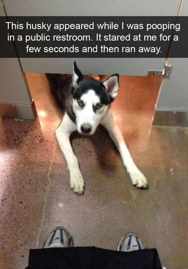 visit www.amazingdogtales.com for the best funny dog joke pics,inspirational dog stories and dog news.... We're not saying Huskies are the best dog. We're just providing a bunch of cute and funny data and letting you decide. [via ebaumsworld]