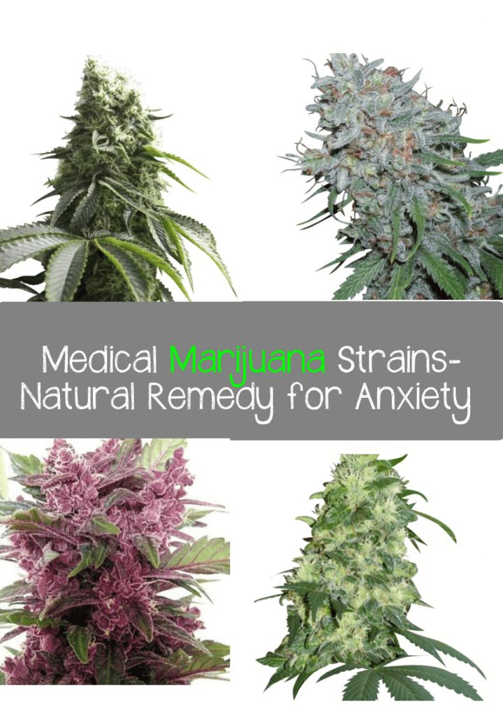 """Medical Marijuana-A Natural Remedy for Anxiety Bill Zimmerman, PhD, former President of Americans for Medical Rights (AMR), stated in his 1998 bookIs Marijuana the Right Medicine For You?: """"Some patients have found the mood altering effects of marijuana to be helpful for treating mood disorders such as anxiety, depression and bipolar (manic-depressive) illness. Using marijuana […]"""