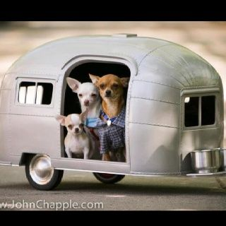 chihuahua dog airstream