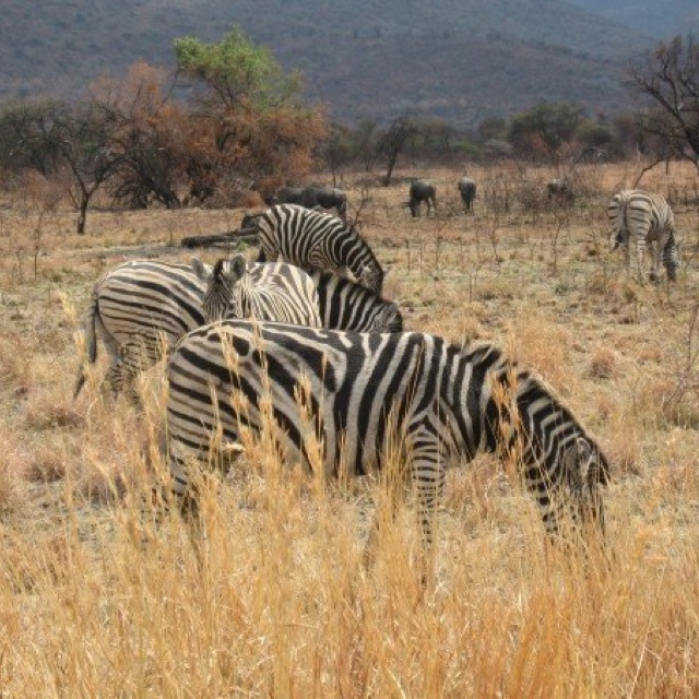 Pilanesberg South Africa 11