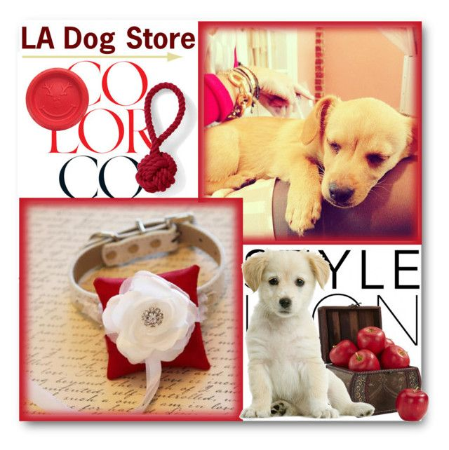 """LA Dog Store"" by ladogstores ❤ liked on Polyvore featuring Lauren Conrad, Nearly Natural and Lands' End"