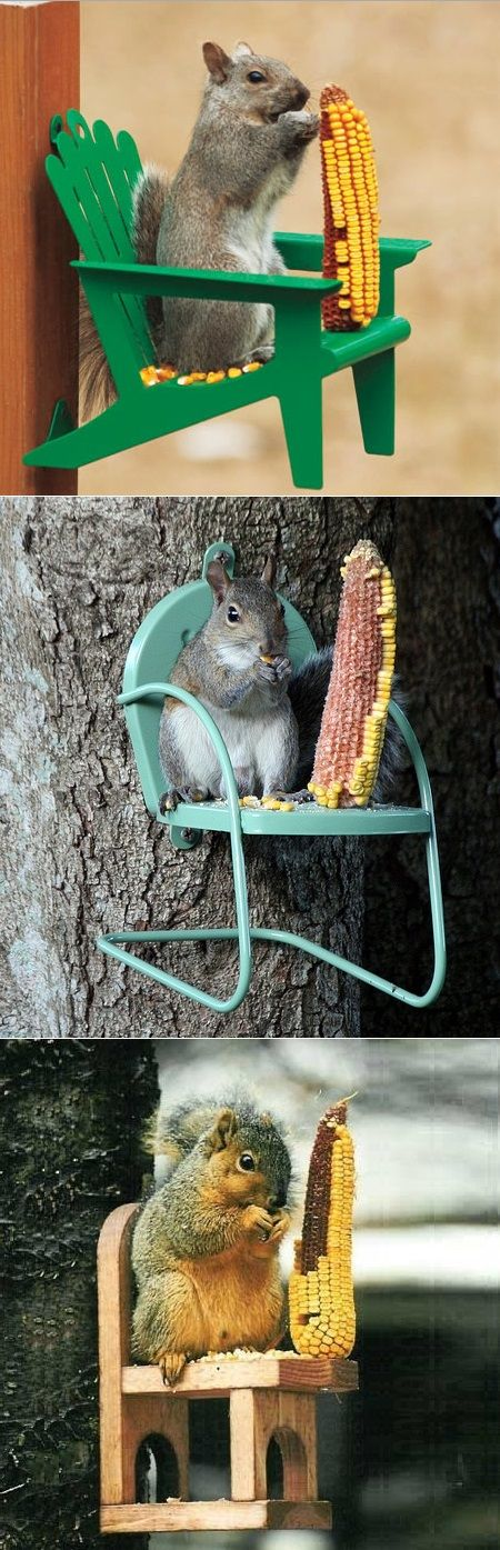 I love Squirrels if you'd ever took the time to watch one you'd think they were very smart and crafty animals just make sure when you feed them they don't have access to your house or roof of the house that's all.Nx
