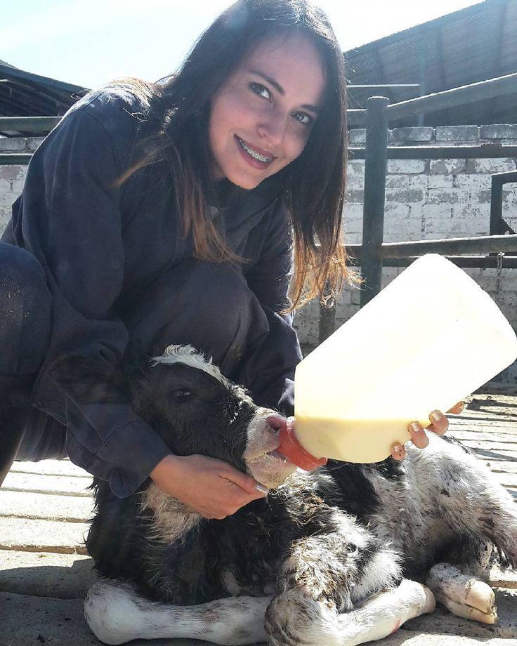 No sé si irme o quedarme aquí. Aunque el viaje en la carrera de MVZ no fue tan maravilloso como pensé tiene varias cosas que valieron la pena.  2018 será un año lleno de decisiones por tomar. Aquí vamos  #VetLife #Veterinarian #DairyCattle #Holstein #Cow #Vaca #LoveCows #MVZ #Veterinaria #Milk #MedicinaVeterinaria