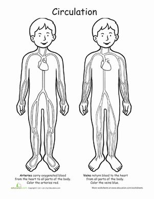 54 Best Anatomy Coloring Pages Images On Pinterest