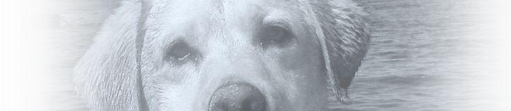 dog sympathy memorial poems