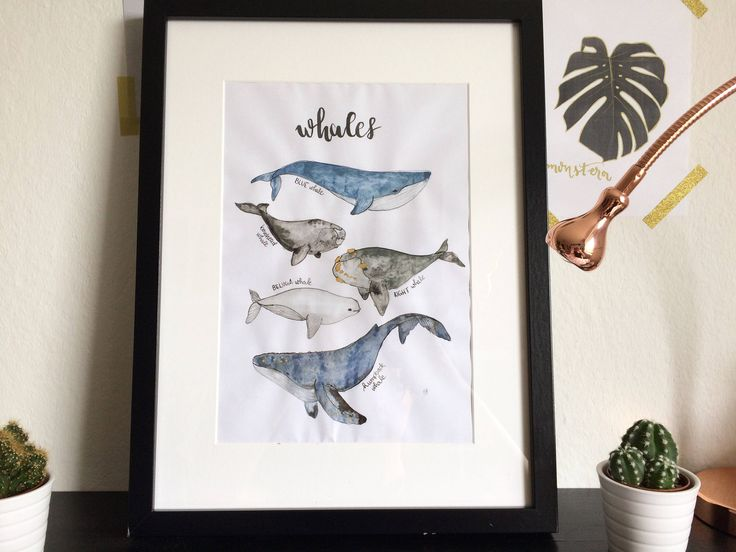 A personal favourite from my Etsy shop https://www.etsy.com/listing/521168802/watercolor-whale-species