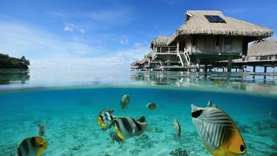 The Real Deal from Classic Vacations Your Tahitian Getaway Stay 7 nights in The Islands of Tahiti and fly with Air Tahiti Nui, and you'll receive $600 off your booking! Plus, you'll also enjoy a 2-for-1 Bora Bora snorkeling tour, hotel savings and more! http://www.fugazitravel.com/classics-real-deal.html #classicvacations #tahiti