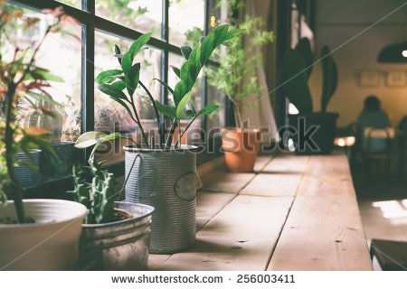 A small plant pot displayed in the window vintage color