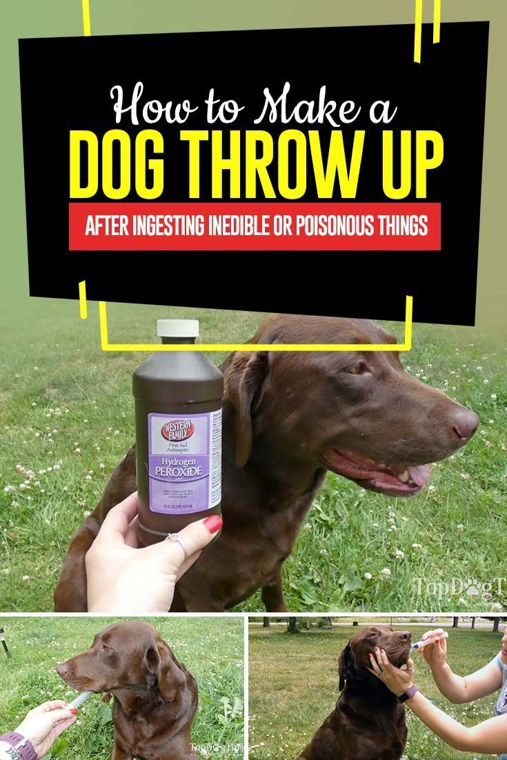 How To Make A Dog Throw Up Dog Throwing Up Dog Training Tips