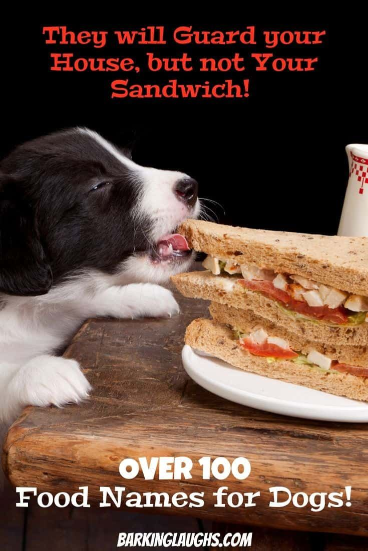 Appetizing Food Names For Dogs To Satisfy Your Hunger In 2020