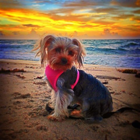 Dogs Love Beaches - courtesy of Fort Lauderdale Seaside Photography. https://www.facebook.com/FortLauderdaleSeasidePhotography
