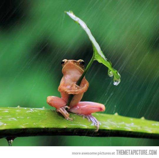 I know I am a frog, but hey, don't gauge me. I am who I am.