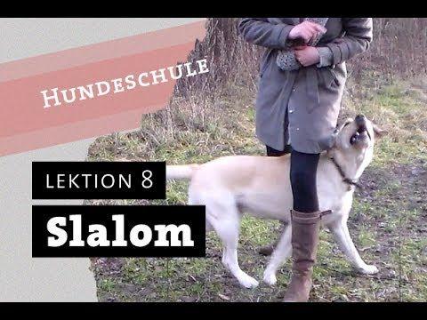 SLALOM - Wie bringe ich meinem Hund bei durch die Beine zu laufen Trick ...