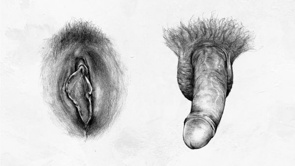 tecknat sex