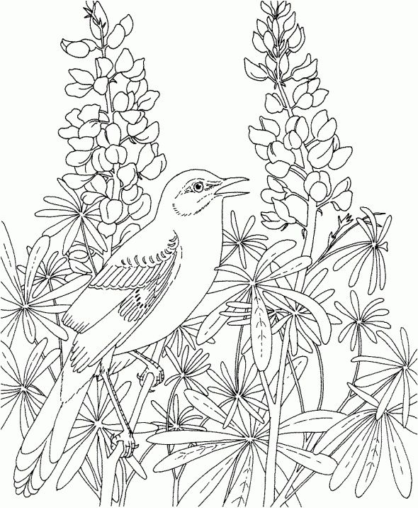 Beautiful Birds And Flowers Coloring Books Free Pages
