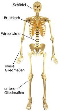 Palkan: Menschliches Skelett