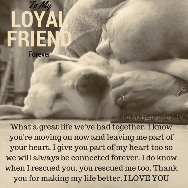 Best Dog Quotes Images On Pinterest Dog Quotes Dogs And Dog - 20 reasons why you should be thankful to have a dog