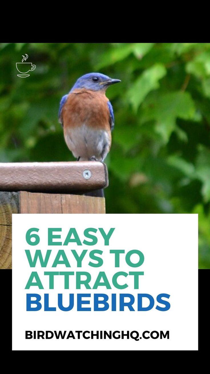 How To Attract Bluebirds: 6 Proven Tips (2020) - Bird ...