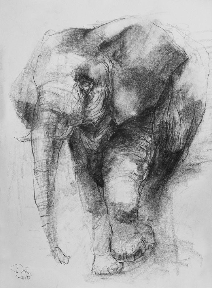 elephant (pencil)