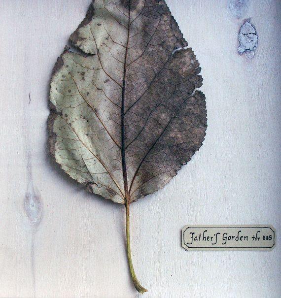 Single Leaf Shadow Box by PlantsAndPatterns on Etsy