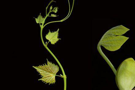 « Les plantes bougent, sentent et réagissent mais nous ne sommes pas capables de le voir »