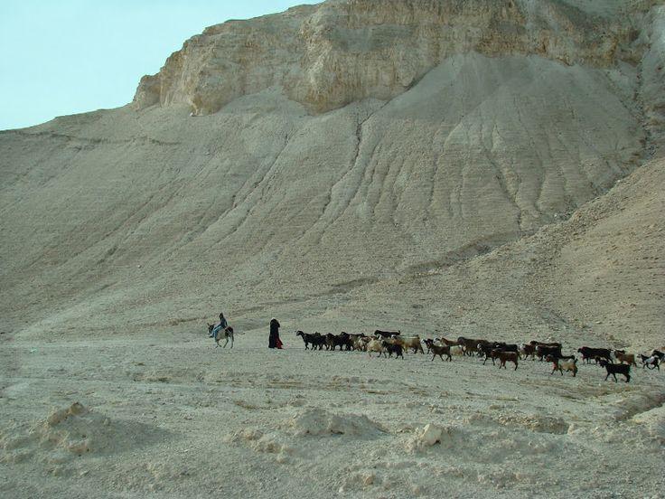 Palestine Gionna Korini - Φωτογραφίες - Google+