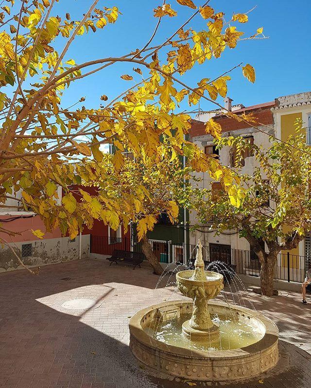 Осень продолжается. #испания #аликанте #вильяхойоса #осень #espana #spain #alicante #villajoyosa  #otoño #winterinspain