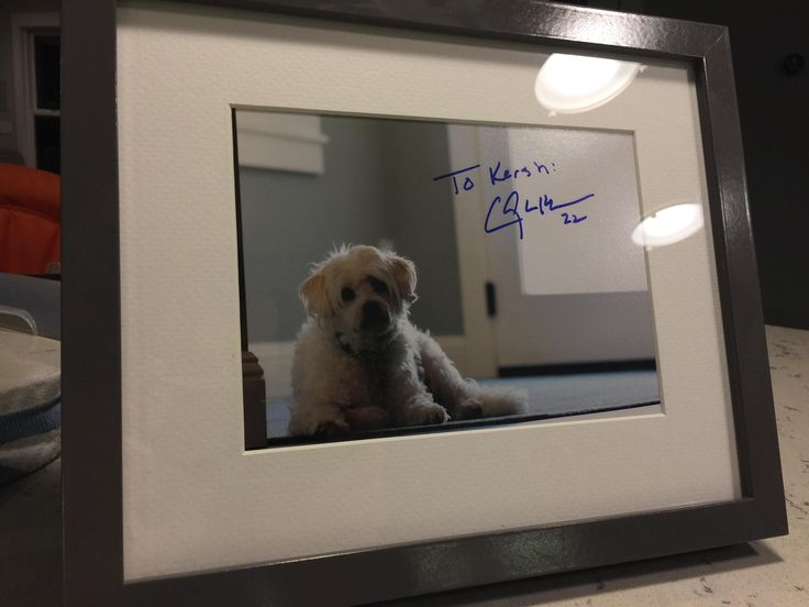 we adopted a shelter dog named it Kershaw and sent a picture to the Dodgers...this arrived in the mail today http://ift.tt/2l6OKVX