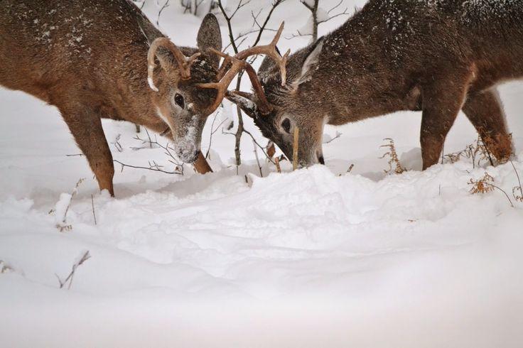 "Janie's Pocono Mountain Garden: The Poconos ""WILD"" Wildlife And Weather"