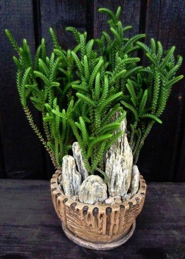 plantas ornamentales de interior y exterior