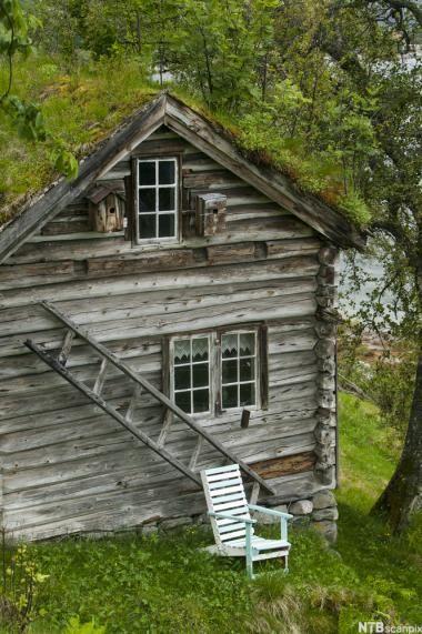 Gammelt hus med gress på taket. Overvokst torvtak. Hagestol ved en trestige