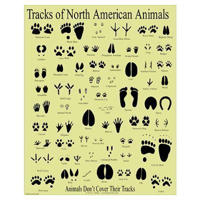 animal tracks identification for kids - Google Search