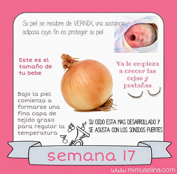 semana+17+embarazo+tamaño+bebe+embrion+feto+mimuselina.jpg (1568×1536)