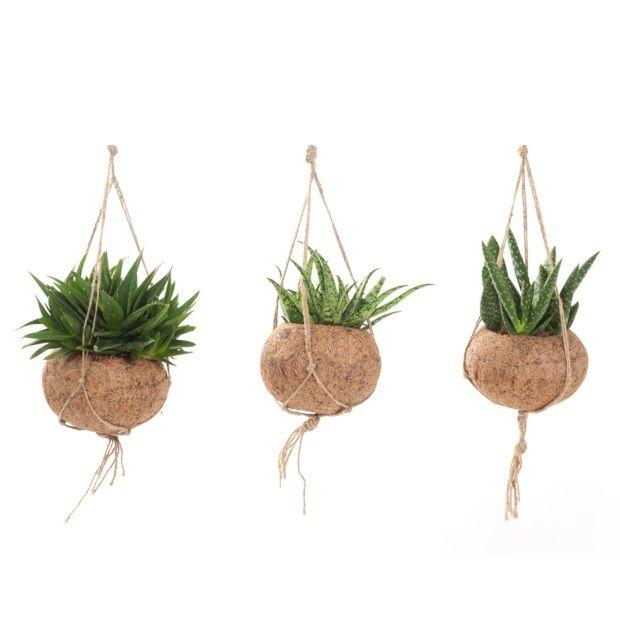 25 beste idee n over hangplanten op pinterest hangplant binnenshuis hangende planten en - Ideeen buitentuin ...