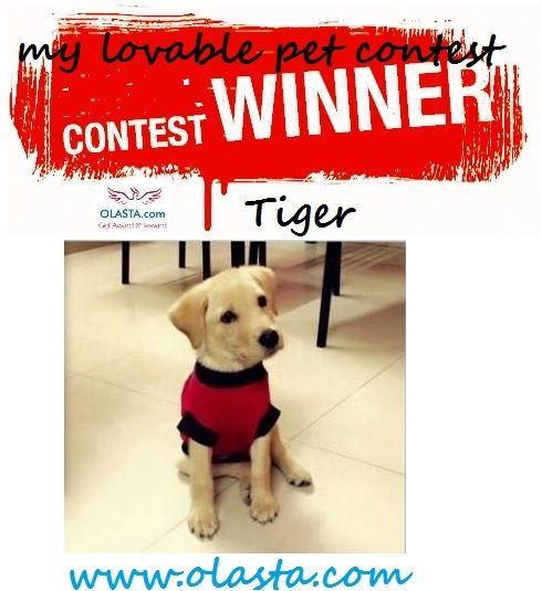 My Lovable Pet Contest Winner 2015