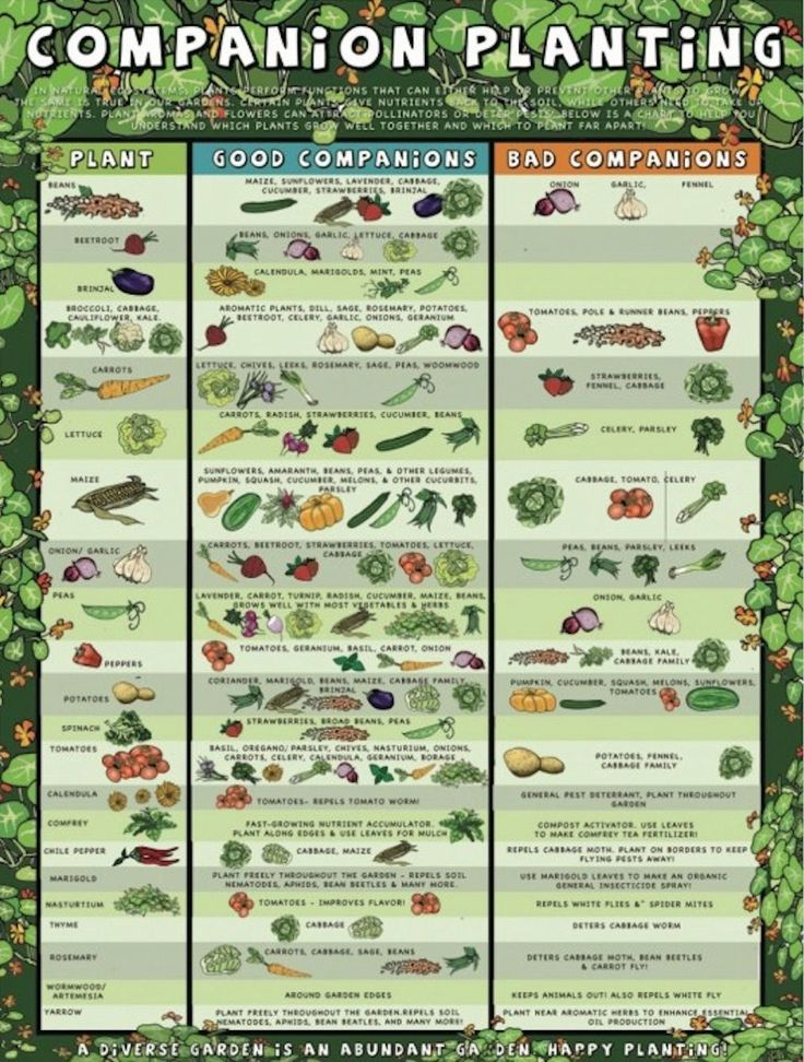 The  Best Companion Planting Chart Ideas On